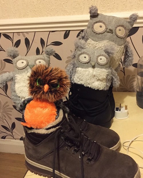 Owls sitting in shoes